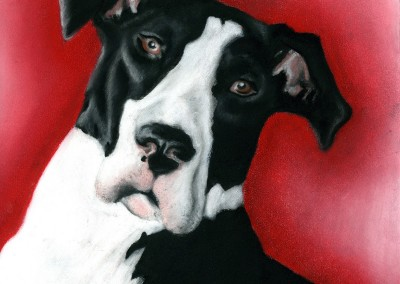 Dog Portrait - 2015